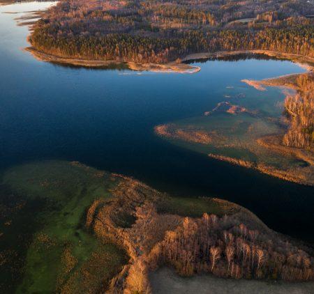 Miškas prie ežero