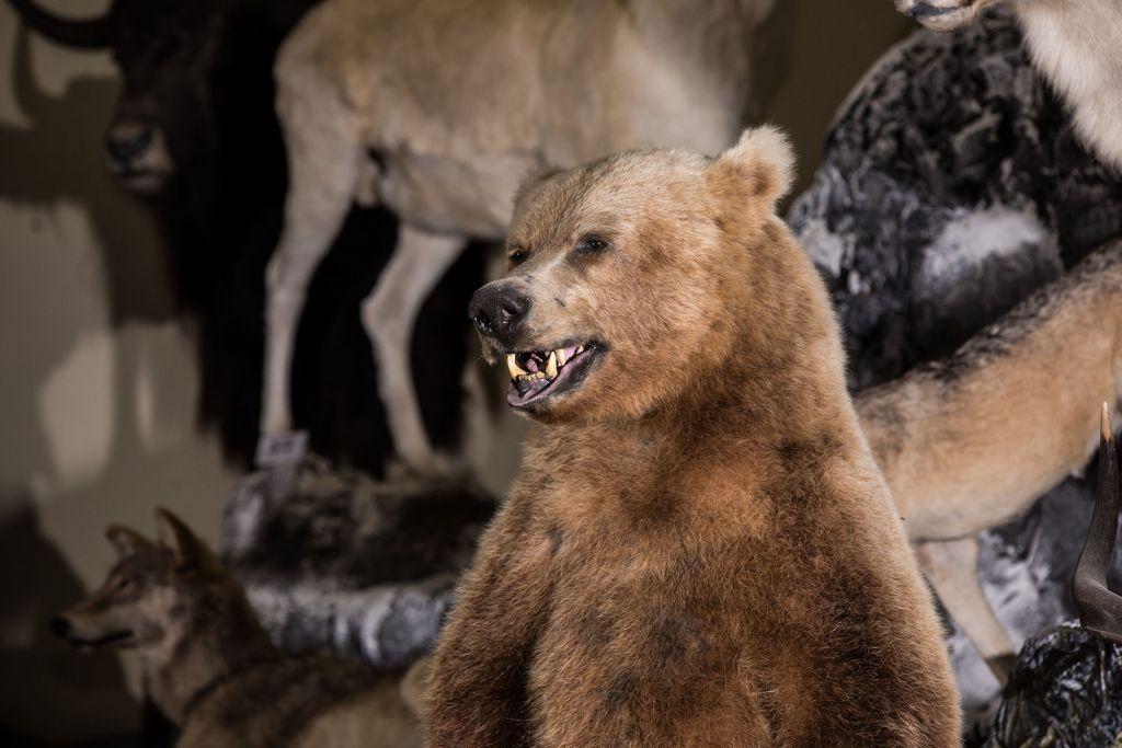 Zoo muziejus